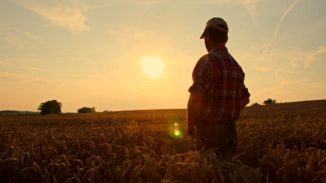 WS CS Farmer Wiping His Forehead At Sunset video