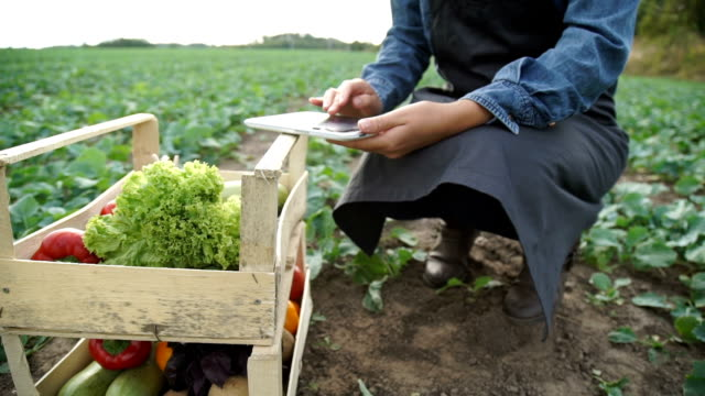 A farmer with a tablet evaluates the harvest video
