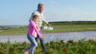 Farmer With Daughter Harvesting Organic Carrot Crop On Farm video