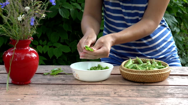 farmer woman hands hull fresh green peas on red wooden table video