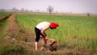 Farmer working in the field video