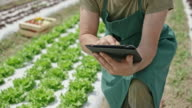 Farmer working with a digital tablet in lettuce field and video