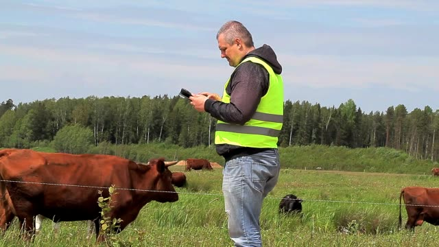 Farmer working with tablet PC near cows at pasture video
