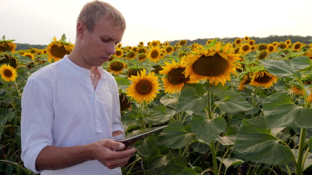 Farmer working with the digital tablet video