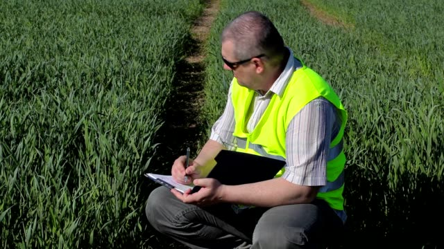 Farmer writing at the green cereal field video