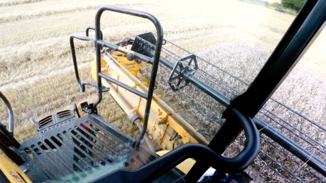 Farmer yellov combine harvester on field video