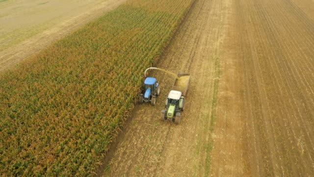 AERIAL Farmers Cutting Corn Silage video