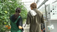 Farmers discussing by tomato plants in greenhouse video