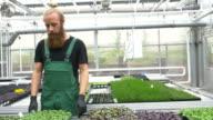 Farmers examining saplings in greenhouse video