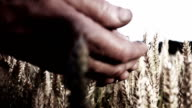 HD SUPER SLOW MO: Farmer's Hands Dropping Wheat Grains video