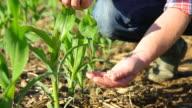 SLO MO Farmer's Hands Pouring Corn Maize video