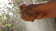 Farmer's hands. video