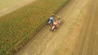 AERIAL Farmers Harvesting Corn Silage video