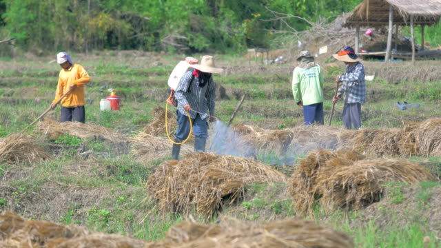 Farmers prepare the land for planting and spraying pesticides video