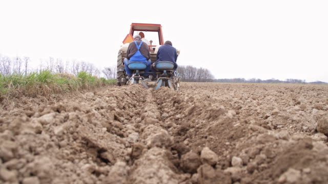 Farmers sowing potato on the field video