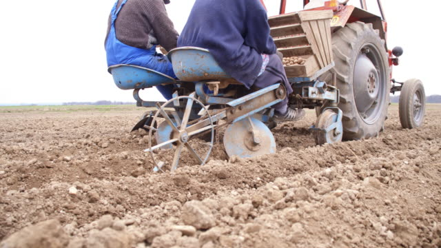 Farmers sowing the potato video