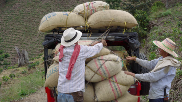 Farmers tying the sacks of coffee to the car video
