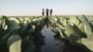 Farmers Walking through Wet Cabbage Field video