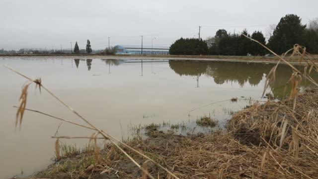 Farmland Flooded Field dolly shot video