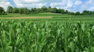 Farmland video
