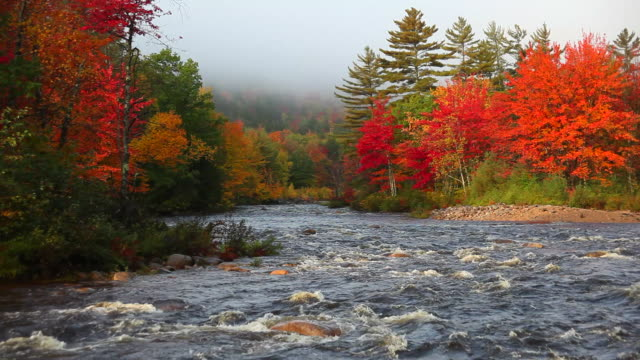 Fast Flowing River in Autumn video