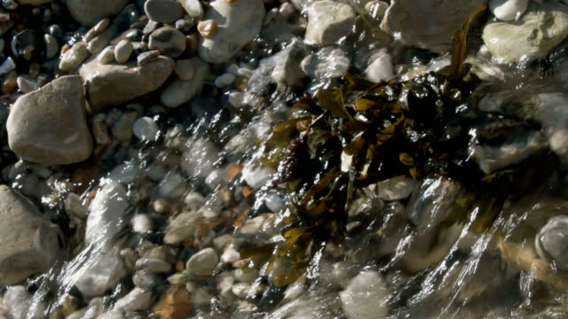 Fast flowing water over pebbles and seaweed video