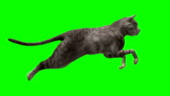 Fast Running Cat Green Screen (Loopable) video