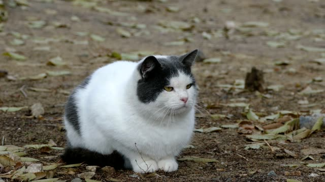 fat cat on the street video