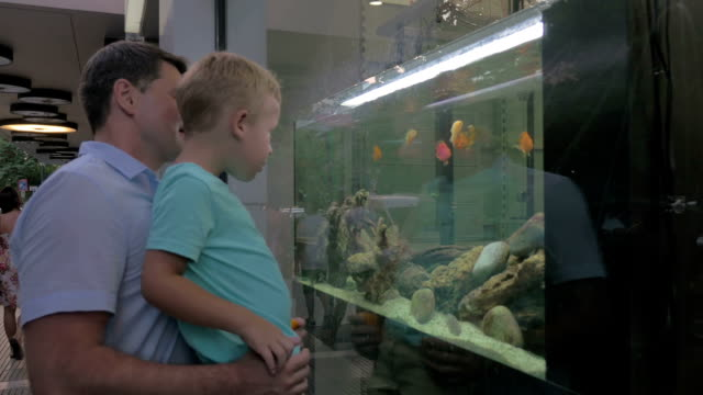 Father and child watching fish in shop-window aquarium video