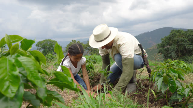 Father and daughter planting a coffee plant video