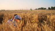Father and son gathering in a wheat field video