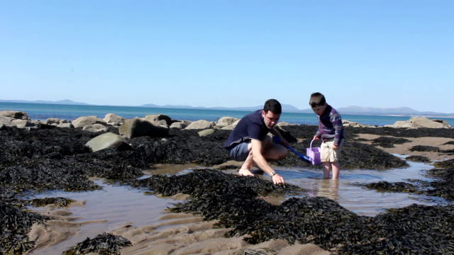 Father and Son On The Perfect Tidal Pool Beach video