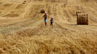 father and son running on the field near the haystacks, mown field video