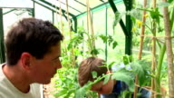 Father And Son Watering Plants In Greenhouse video
