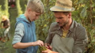 Father teaching son about grape clusters in the vineyard video