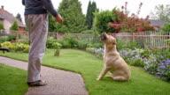SLO MO Feeding a dog in the backyard video