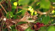 Feeding baby birds in nest video