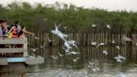 feeding birds on a sea video