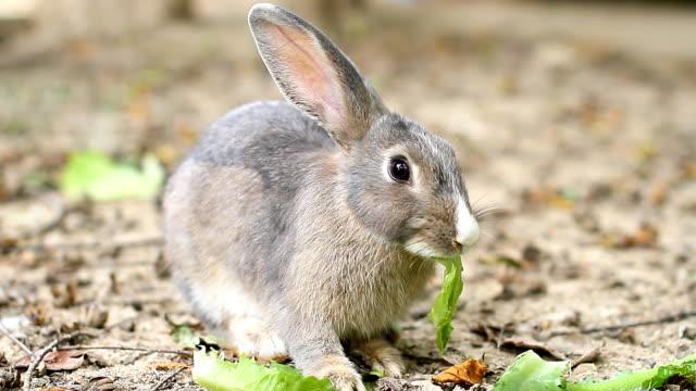 feeding bunny. video