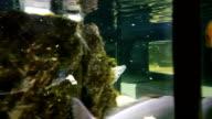 Feeding fish in decorated Marine Aquarium video