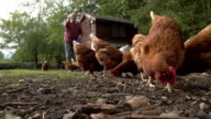 Feeding Free Range Chickens video