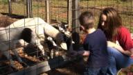 Feeding Goats video