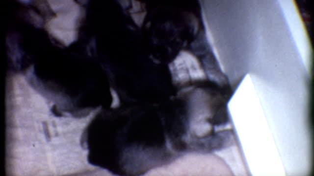 Feeding Puppies 1960's video