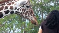 Feeding the Giraffes video
