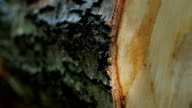 Felled tree trunk in the forest video