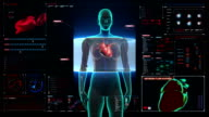 Female body scanning heart. Human cardiovascular system in digital display. video