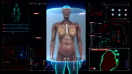 Female body scanning muscle structure in digital display dashboard. X-ray. video
