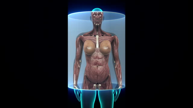 Female body scanning muscle structure. X-ray. video