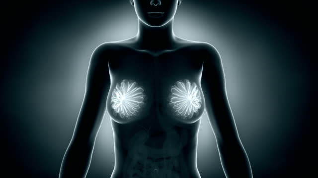 Female breast in x-ray video