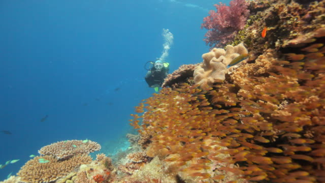 female diver diving along reef video